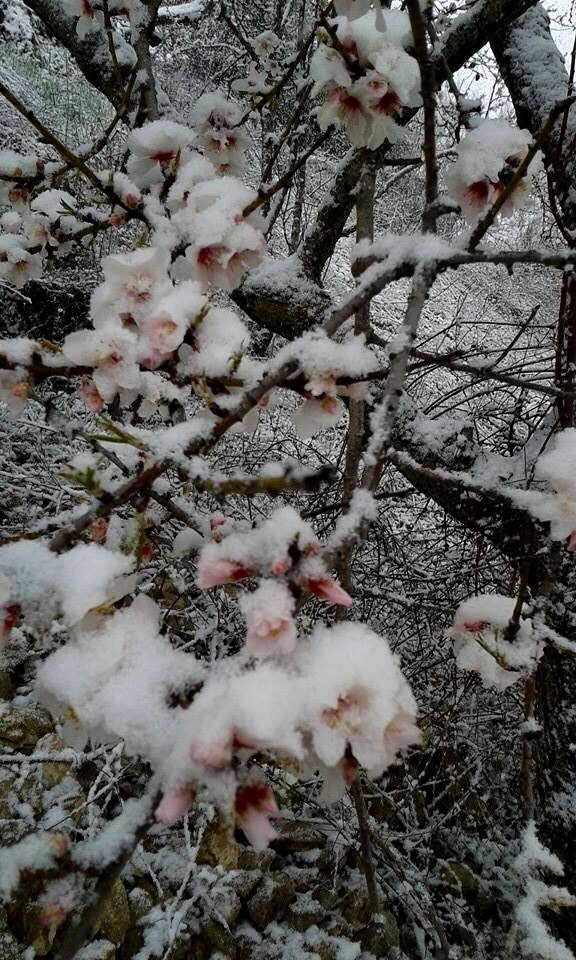 Neve di primavera di @ Edda ecle ragone